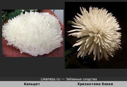Этот кальцит похож на хризантему белую