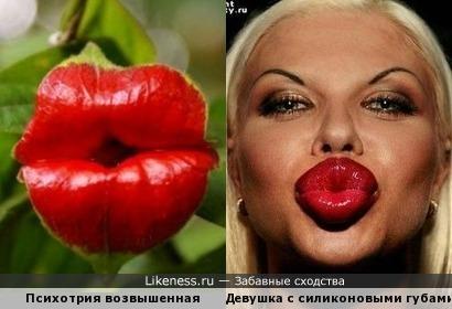 Цветок Психотрия возвышенная похожа на силиконовые губы