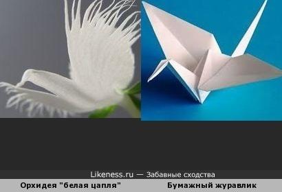 "Орхидея ""белая цапля"
