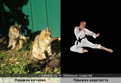 Котенок занимается каратэ))