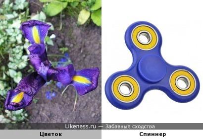 Цветок похож на спиннер