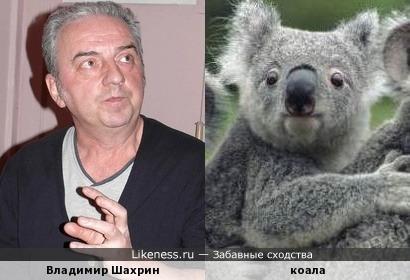 Владимир Шахрин и коала :-)