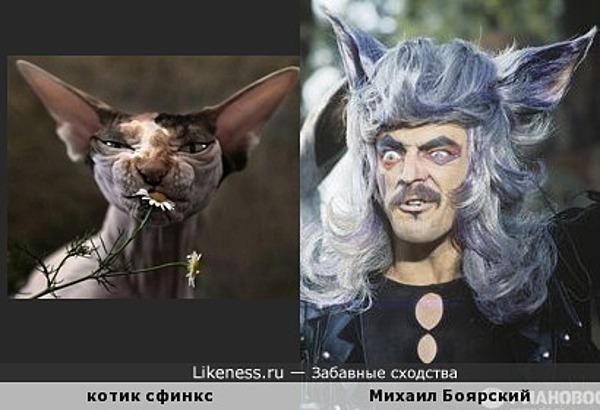 забавный котик похож на актера Михаила Боярского