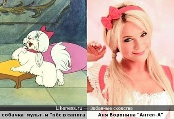 """беленькая пушистая болонка с мультфильма и """" Ангел -А"""