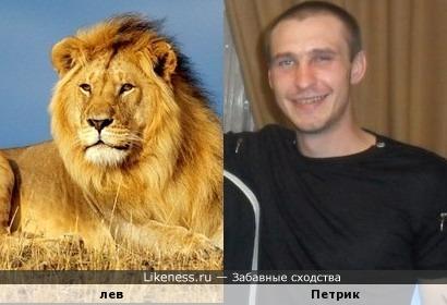 Петрик похож на льва