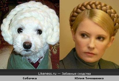 Собачка похожа на Юлию Тимошенко