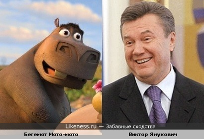 Бегемот Мото-мото (Мадгаскар) и Виктор Янукович похожи