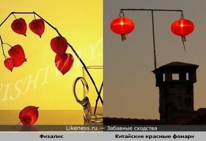 Физалис похож на китайские красные фонари