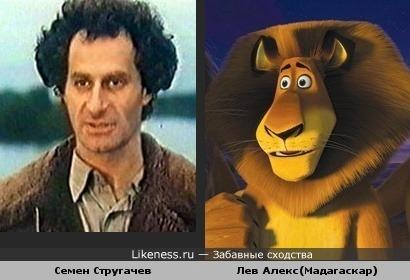 Семен Стругачев похож на льва Алекса (Мадагаскар)