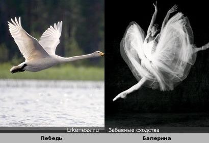 Балерина похожа на лебедь