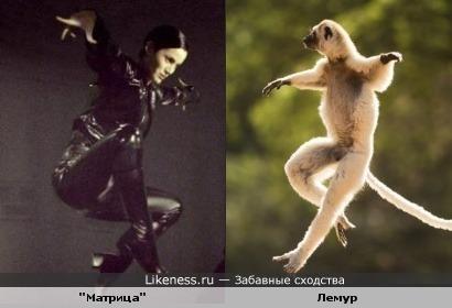"""животные копируют """"Матрицу"""""""