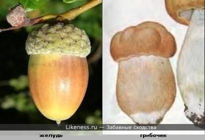 желудь и грибочек похожи формой