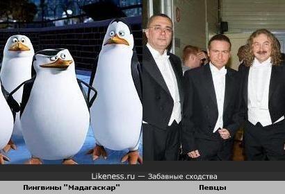 Как пингвины