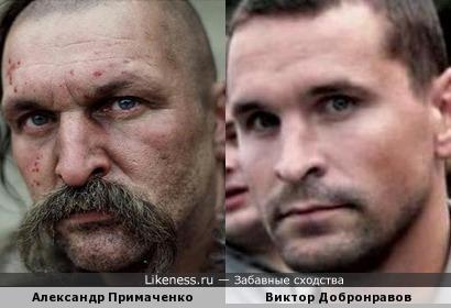 Примаченко похож на Добронравова