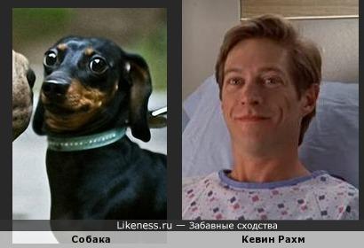 Собака похожа на Кевина