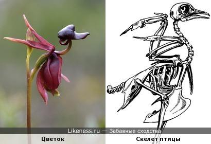 Цветок похож на скелет птицы
