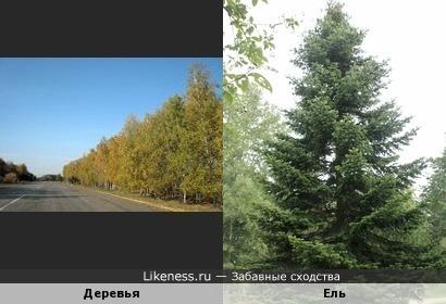 Деревья напоминают половину перевернутой ёлки