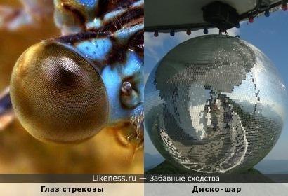 Глаза стрекозы похожи на диско-шар