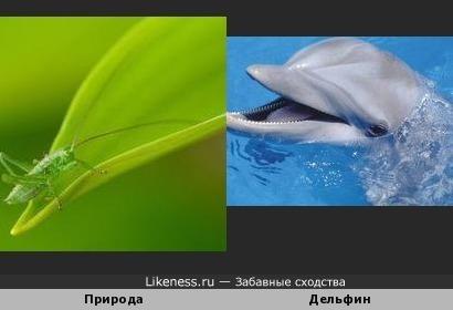 Композиция фото напомнила дельфинчика...