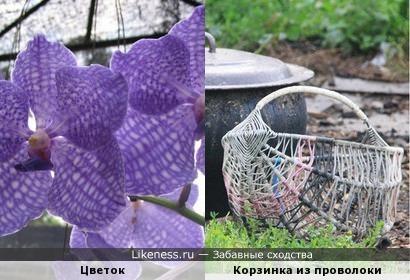 Цветок напомнил Корзинки из проволоки
