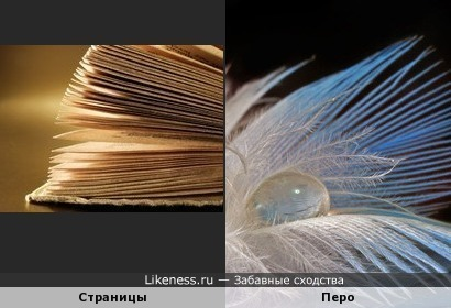 Книга -Пёрышко