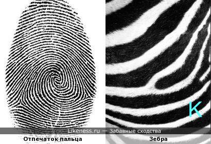 Отпечаток пальца похож на окраску зебры...