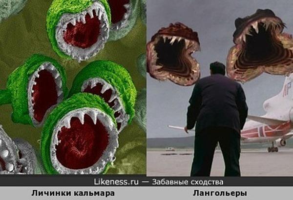 Лангольеры Скачать Торрент - фото 2
