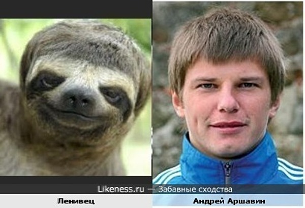 Ленивец похож на Анрея Аршавина