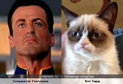 Кот похож на Сильвестра Сталлоне