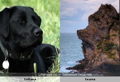 Скала в Италии похожа на грустную собаку