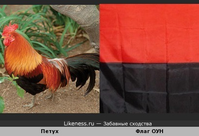 Петух похож на флаг Украинских националистов