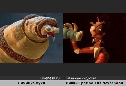 Личинка мухи похожа на Вилли Тромбон из Neverhood
