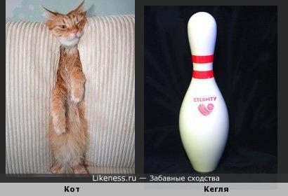 Застрявший в диване кот похож на кеглю для боулинга