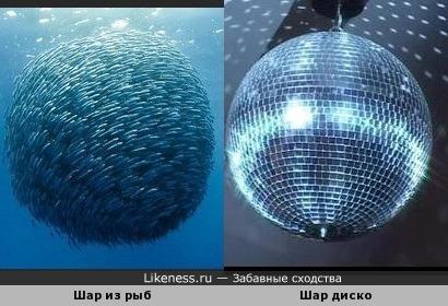 Диско рыбки