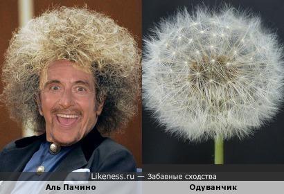 Альдуванчик )))