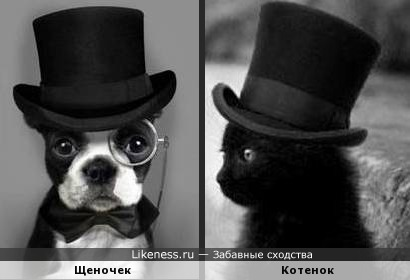 Дело в шляпе )