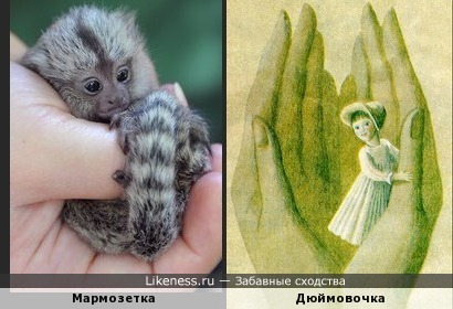 Мармозетка -Дюймовочка