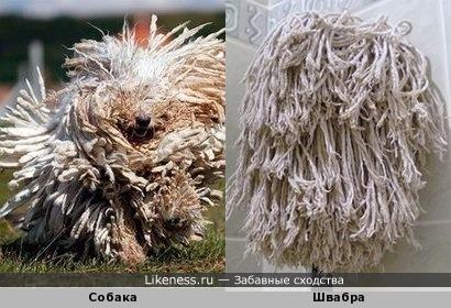 Отряхивающаяся собачка так похожа на швабру)
