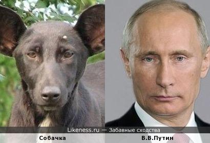 Собака очень похожа на нашего президента
