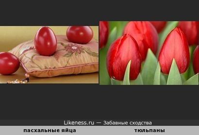 Тюльпаны похожи на пасхальные яйца