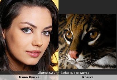 Мила Кунис из отряда кошачьих