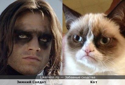 Зимний солдат и кот