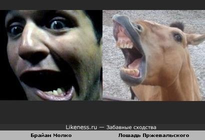 Брайна Молко(Placebo) похож на Лошадь Пржевальского