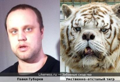 Павел Губарев похож на умственно-отсталого тигра