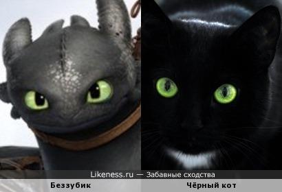Фото кота в дракона