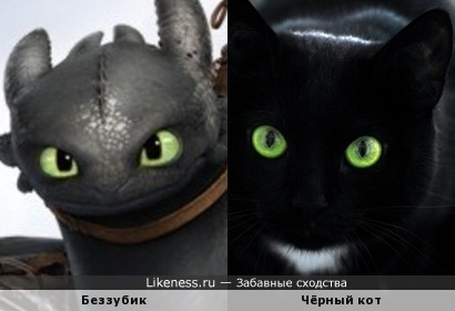 Беззубик похож на кота