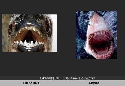 Зубы акулы и пираньи