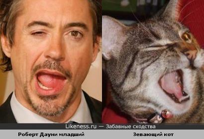 Актеры кошки роберт дауни младший