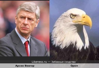"""Тренер лондонского """"Арсенала"""" Арсен Венгер похож на белоголового орла"""