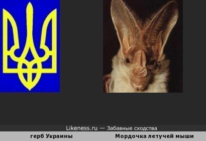 В гербе Украины можно разглядеть мордочку летучей мыши.